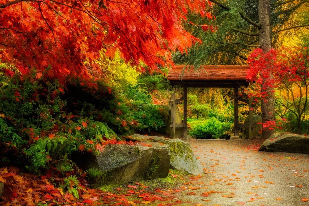 4 Places You Can Go To See Fall Foliage In Seattle